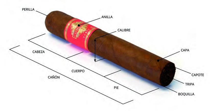 Anatomía de un puro o cigarro premium