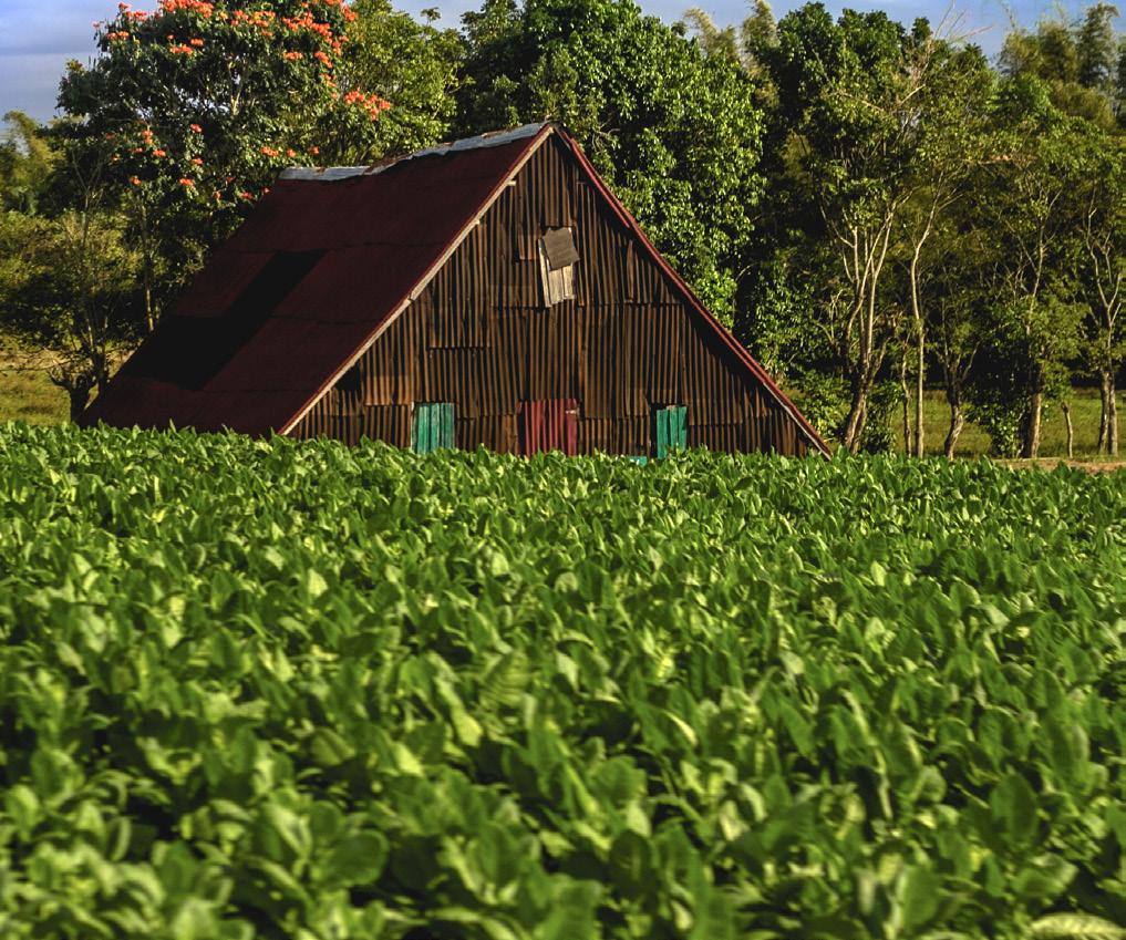 Casa de Tabaco - Pinar del Rio, Cuba.